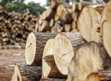 Těžba dřeva a přiblížení